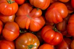 tomates-raf-1